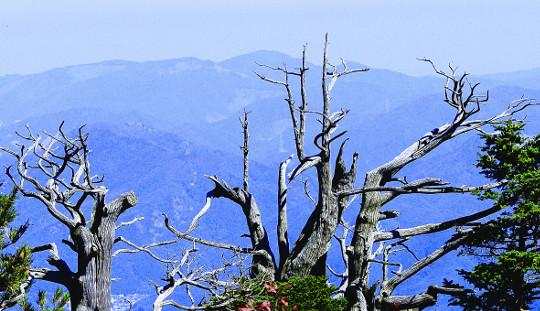 [그 숲길 다시 가보니-임항] 태백산 주목군락에 흩뿌려진 단풍 기사의 사진