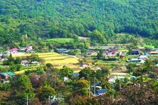 [살기 좋은 명품마을을 가다] (28) 대전 유성구 세동 우리밀마을 기사의 사진