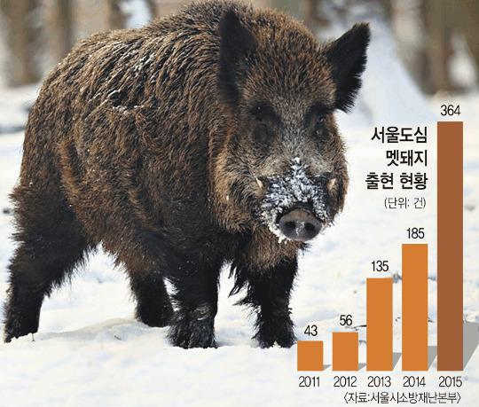 인간 탐욕이 부추긴 '멧돼지의 반격' 기사의 사진
