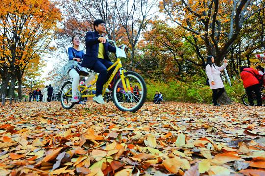 [포토 카페] 낙엽의 거리에서 기사의 사진