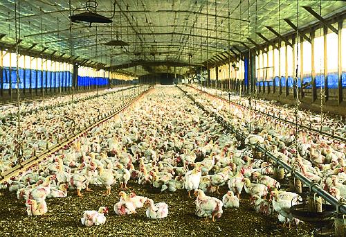 [사이언스 토크] AI와 달걀 기사의 사진