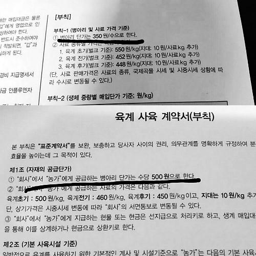 [단독] 병아리값 43%↑… 치킨 대란 우려 기사의 사진