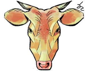 [한마당-박현동] 구제역, 소는 억울하다 기사의 사진