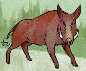 [한마당-고승욱] 인왕산 멧돼지 기사의 사진