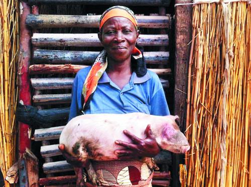 [선교지에서 온 편지] 형편 어려워 90%가 고등학교 못다녀…돼지 분양 사업 결실, 주민들 자립 꿈 심어 기사의 사진