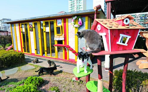 [포토 카페] 고양이호텔을 아시나요 기사의 사진