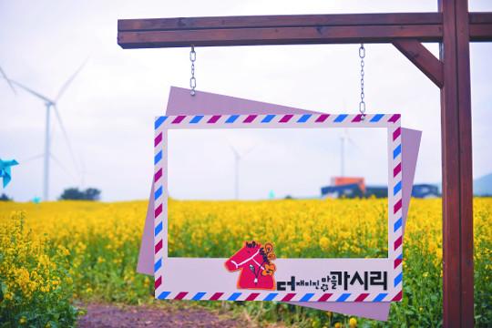 [포토 카페] 유채꽃 마을, 가시리 기사의 사진