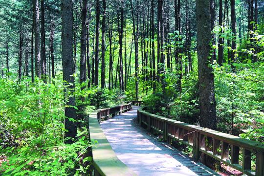 싱그러운 초록 숲 걷다보면 '마음도 치유' 기사의 사진