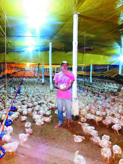 [값싼 식탁, 비싼 대가] 2.6㎏ 닭 키워주고 받는 돈은 고작 106원… 브라질 양계농장 르포 기사의 사진