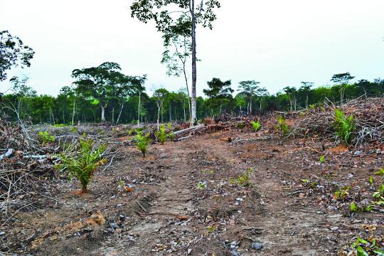 [값싼 식탁, 비싼 대가] 팜오일과 맞바꾼 열대우림… 동물은 멸종, 사람은 호흡기 질환 기사의 사진