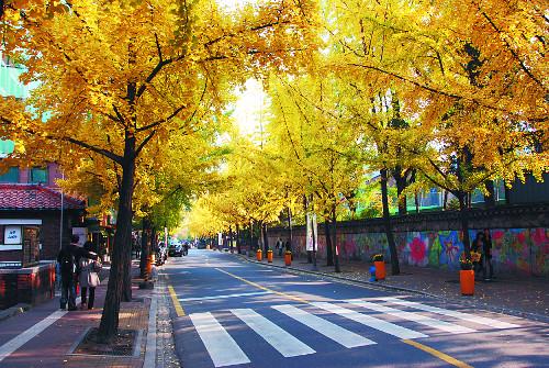 단풍놀이 못 갔다면… 11월 '걷기 여행길' 10곳 기사의 사진
