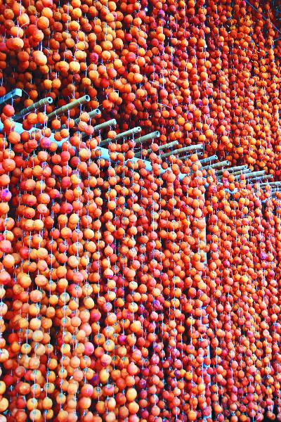 [색과 삶] 곶감 예찬 기사의 사진