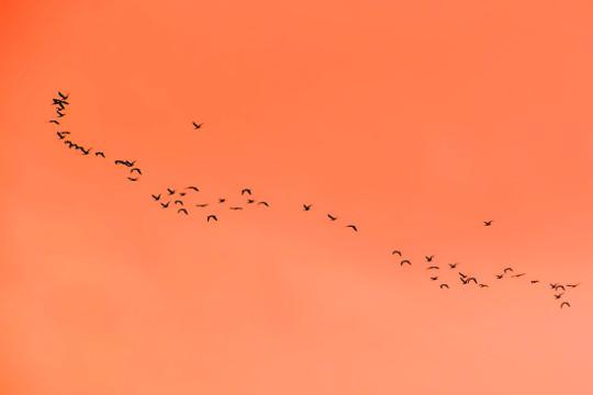 [이지현의 두글자 발견 : 안항(雁行)] 함께 날자, 우리가 너의 날개다 기사의 사진