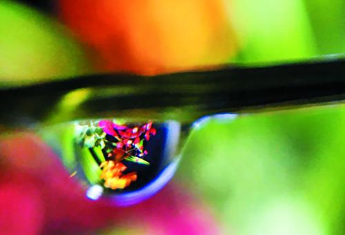 [And 앵글속 세상] '현미경 렌즈' 달았더니… 스마트폰에 눈꽃이 피었습니다 기사의 사진