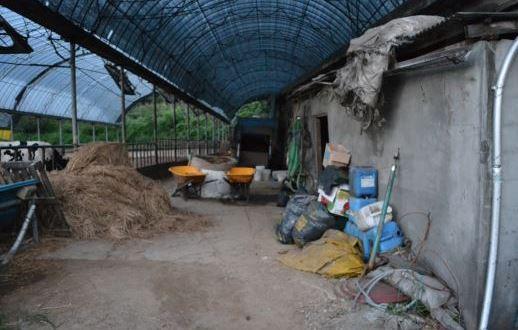[단독] 지금도 계속되는 '현대판 노예'… 경북 농가서 구출 기사의 사진