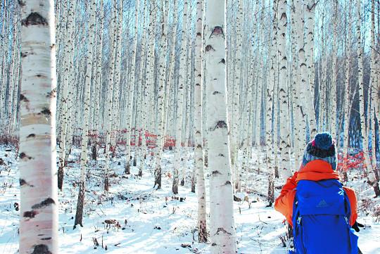 눈꽃트레킹·백패킹·스키보드캠프… 관광벤처기업 '겨울 이색 테마여행' 기사의 사진