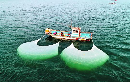 [포토] 남해안의 전통 개불잡이 기사의 사진