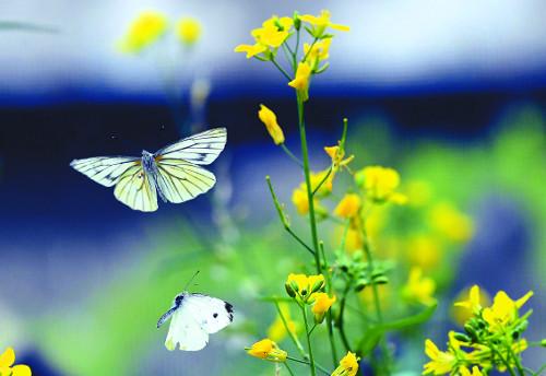 [포토 카페] 나비처럼 훨훨 나는 날을 꿈꾸며 기사의 사진