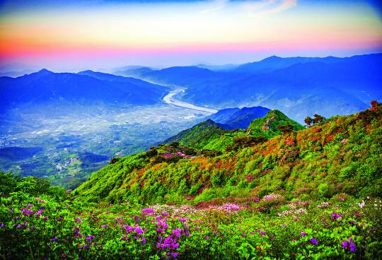 초록 융단·분홍 화원에 햇차 향기 그윽하고… '차 시배지' 경남 하동 힐링 여행 기사의 사진