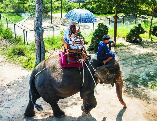 신나는 코끼리 트레킹… 흥미진진한 악어쇼 기사의 사진