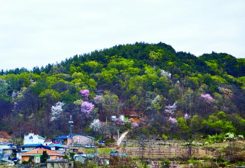 [김선주의 작은 천국] 시골 작은 교회 기사의 사진