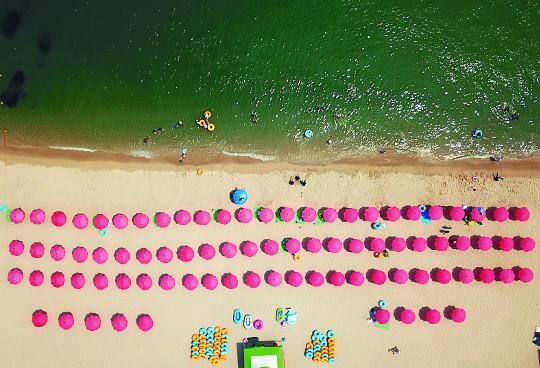 [포토 카페] 해변에 핀 꽃 기사의 사진