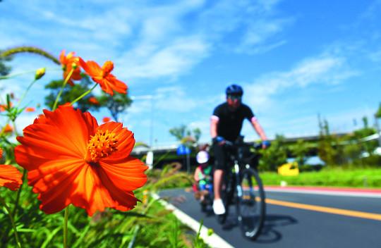 [포토 카페] 코스모스와 자전거 기사의 사진