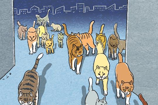 [창-유성열] 고양이들의 도시 기사의 사진