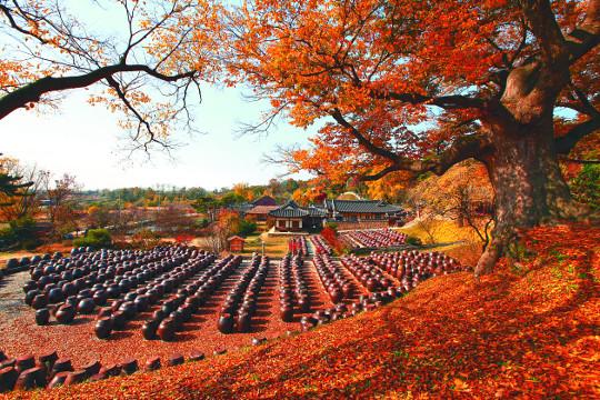 """로케이션 매니저가 추천하는 가을 여행지 """"나도 코트 깃 세우고 걸어볼까"""" 기사의 사진"""