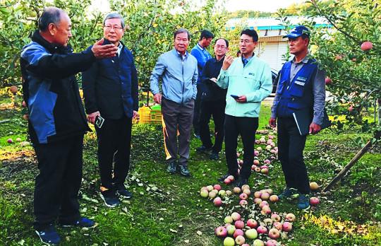 오병관 농협손보 대표, 태풍 '콩레이' 피해 사과 농가 방문 위로 기사의 사진