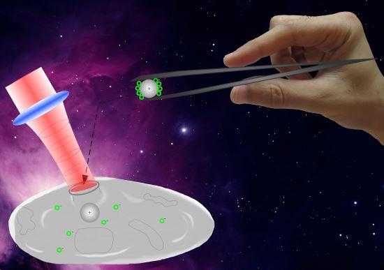 [별별 과학] 마이크로세계의 운반자, 광 핀셋 기사의 사진