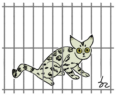 [한마당-라동철] 벵갈고양이 기사의 사진
