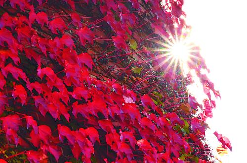 [포토 카페] 익어가는 가을 기사의 사진