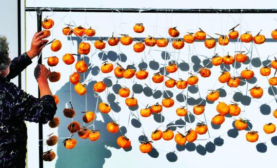 [포토 카페] 곶감 익어가는 계절 기사의 사진