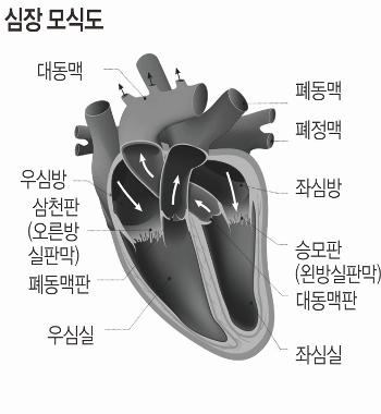 은퇴한 당신, 숨 가쁘다면 심장판막 질환 의심해 보세요 기사의 사진