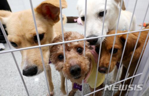 개·고양이, 설 연휴 하루 158마리 유기… 안락사·보호비용 '눈덩이' 기사의 사진